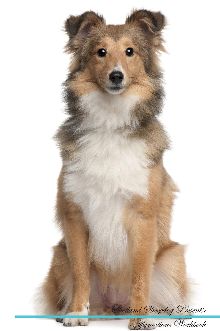 Shetland Sheepdog Affirmations Workbook Shetland Sheepdog Presents. Positive and Loving Affirmations Workbook. Includes: Mentoring Questions, Guidance, Supporting You.