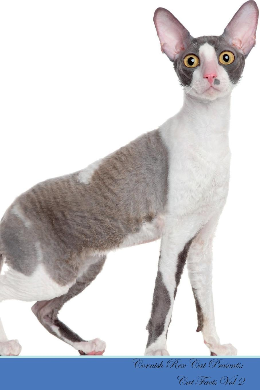 Kitty Loving Cornish Rex Cat Presents. Facts Workbook. Presents Workbook with Self Therapy, Journalling, Productivity Tracker Includes: Space for Notes, To Do Lists, B...
