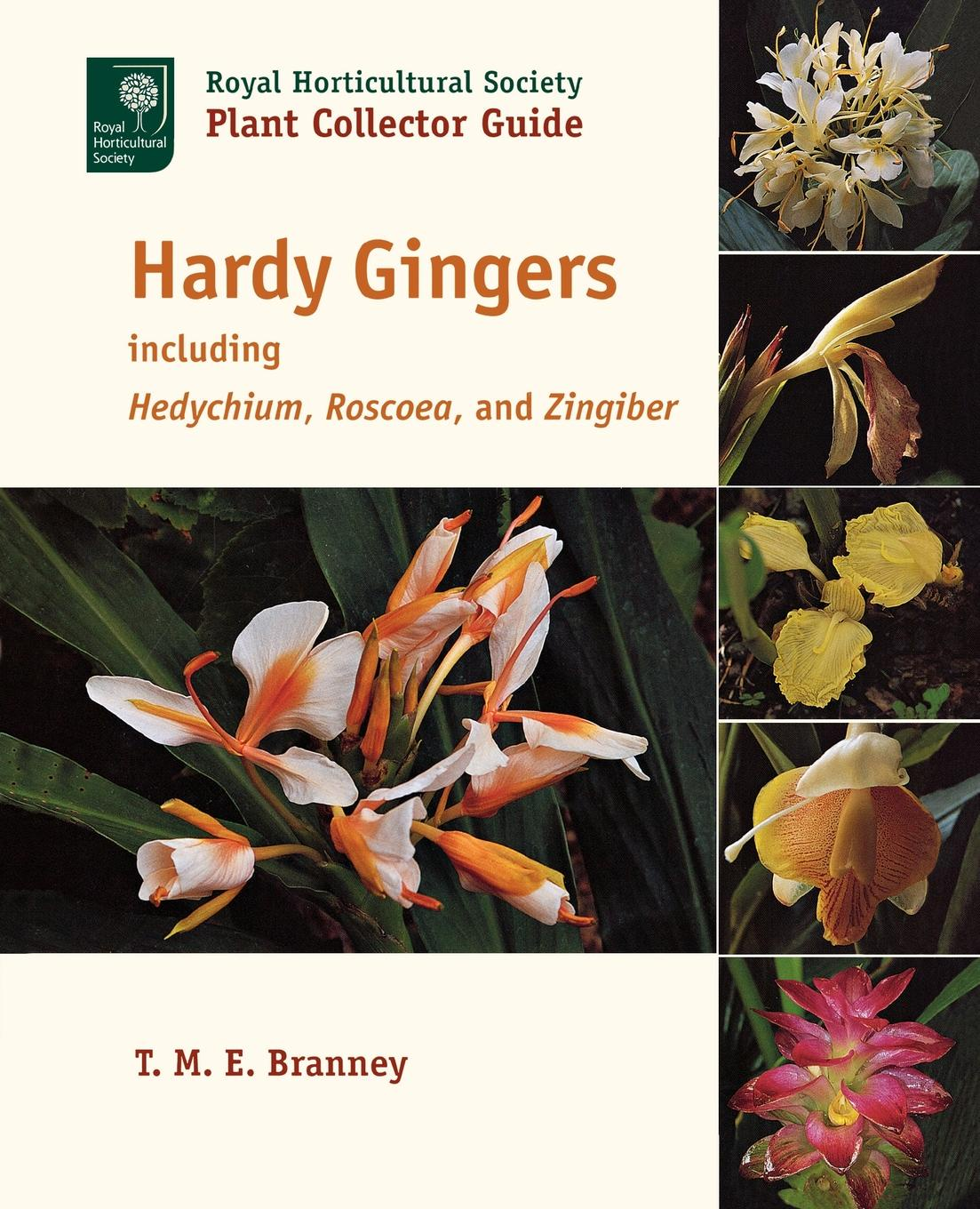 T. M. E. Branney Hardy Gingers. Including Hedychium, Roscoea, and Zingiber in vitro propagation of ginger zingiber officinale rosc