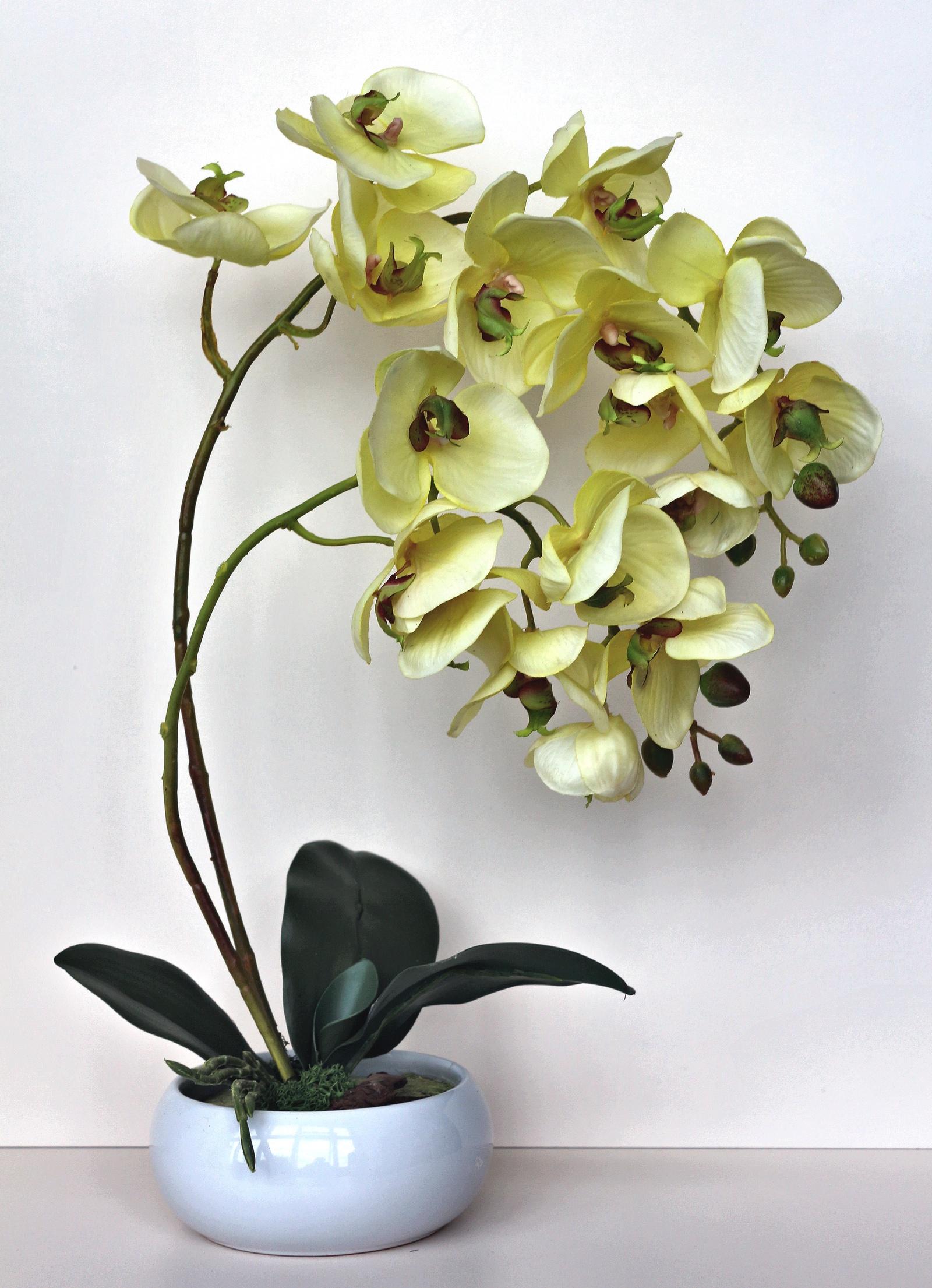 Композиция из орхидей emo 02 композиция из натуральных орхидей