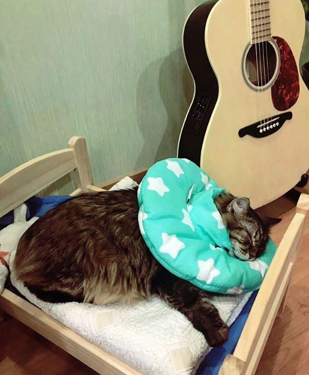 Защитный воротник-подушка для кошек и собак, размер М Freddy's Friends Brand