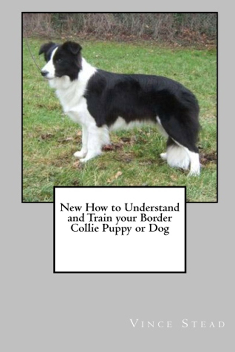 Vince Stead New How to Understand and Train Your Border Collie Puppy or Dog vince stead how to understand and train your golden retriever puppy or dog