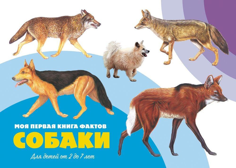 Моя первая книга фактов. Собаки. Книга ND Play цена в Москве и Питере