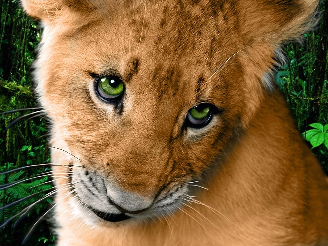 Днем, картинки львица с надписями