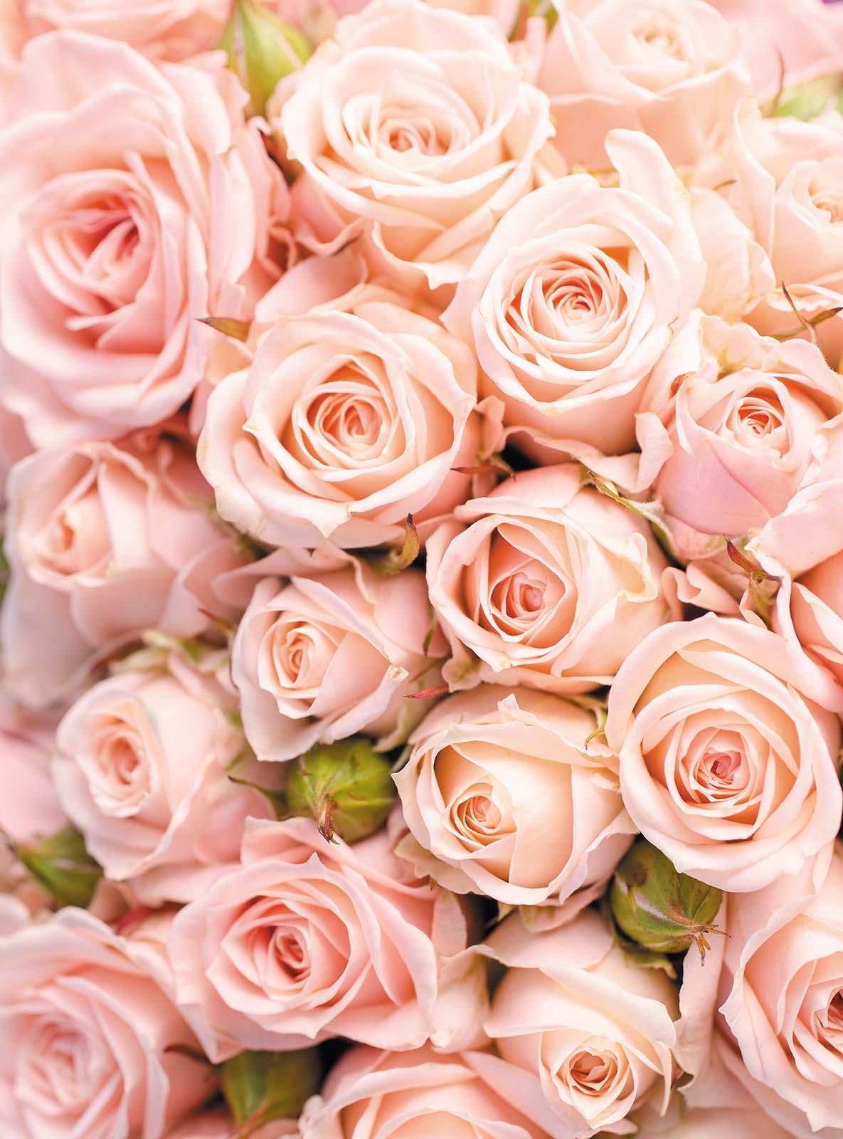 Вертикальная картинка с розами