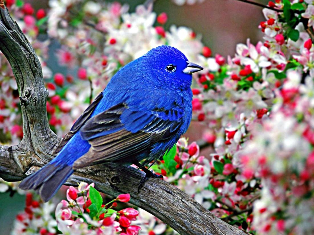 смотреть фотографии с птицами
