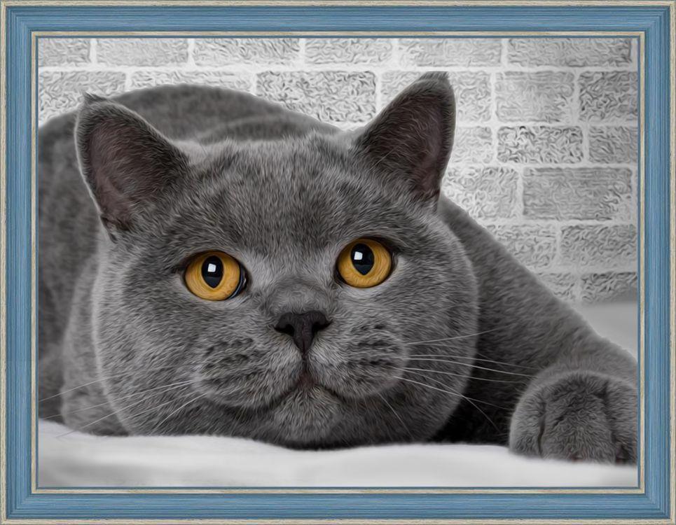 Алмазная мозаика Алмазная Живопись Британский кот, 30x40 см алмазная вышивка синицы на рябине алмазная живопись 55x40см