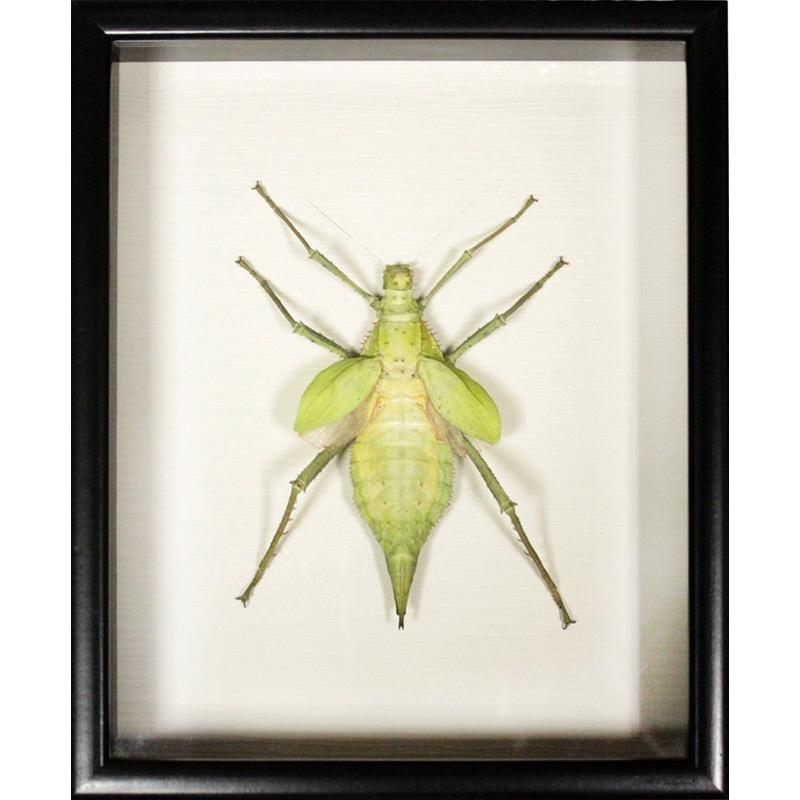 Панно FLORS Жук № 249 (Heteropteryx dilatata, Малайзия)