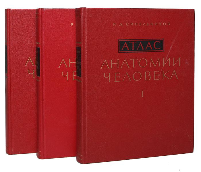 Источник: Синельников Р. Д., Атлас анатомии человека (комплект из 3 книг)