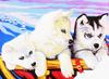 KSG Картина по номерам Лайки - изображение