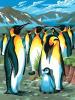 KSG Картина по номерам Пингвины - изображение