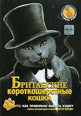 Планета кошек: Британские короткошерстные кошки #1