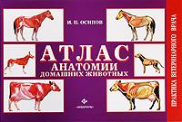 Атлас анатомии домашних животных #1