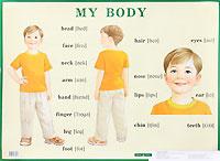 Строение тела человека/ My Body. Плакат #1
