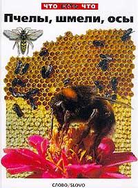 Пчелы, шмели, осы #1