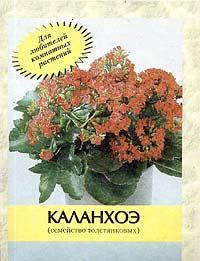 Каланхоэ (семейство толстянковых). Календарь ухода #1