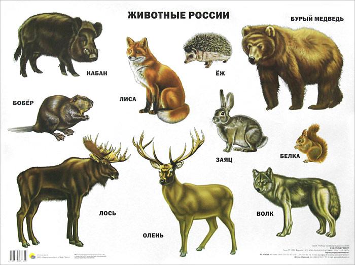 Животные России. Плакат #1