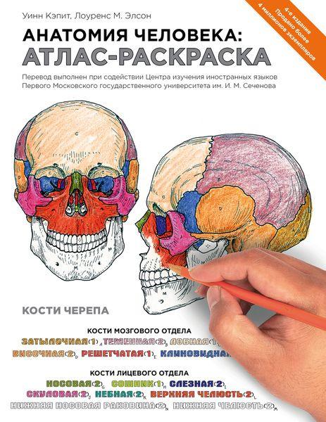 анатомия человека атлас раскраска купить в интернет магазине Ozon с быстрой доставкой