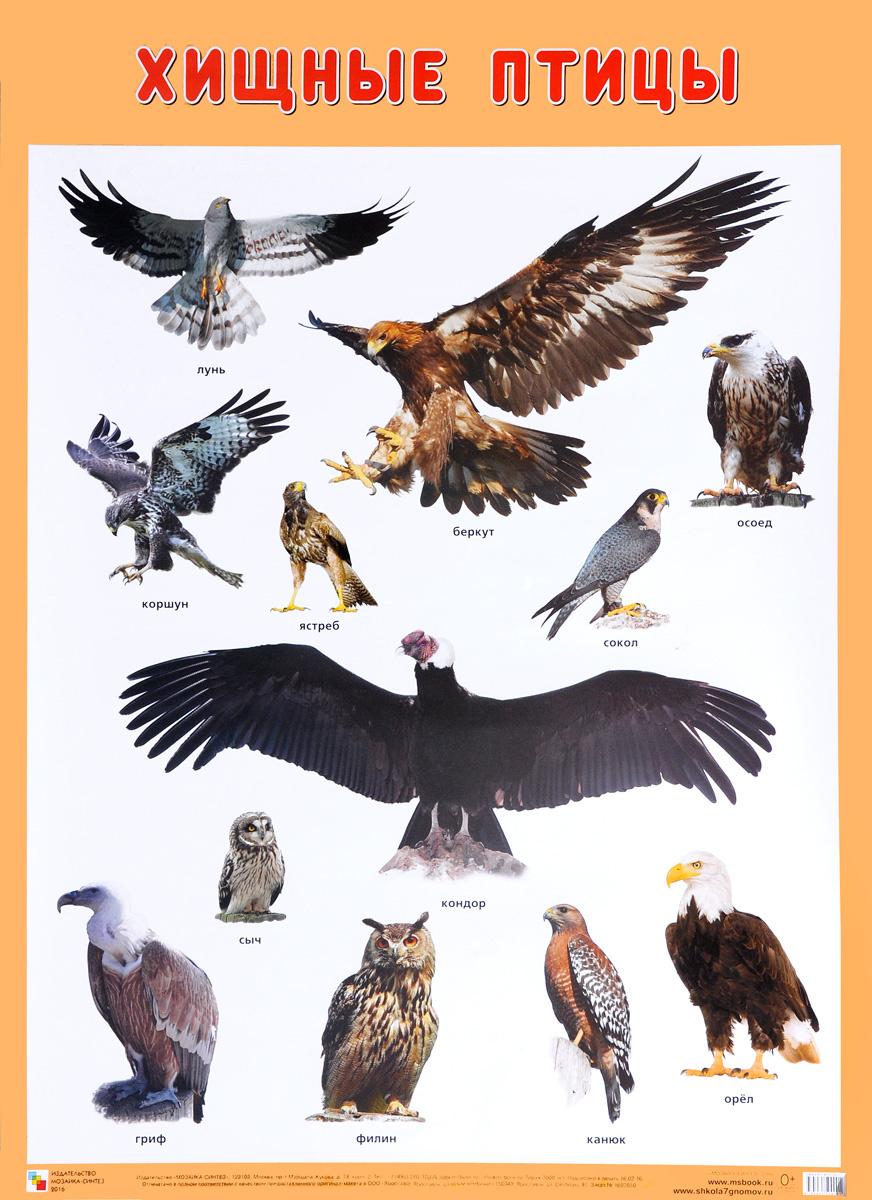 Хищные птицы. Плакат #1