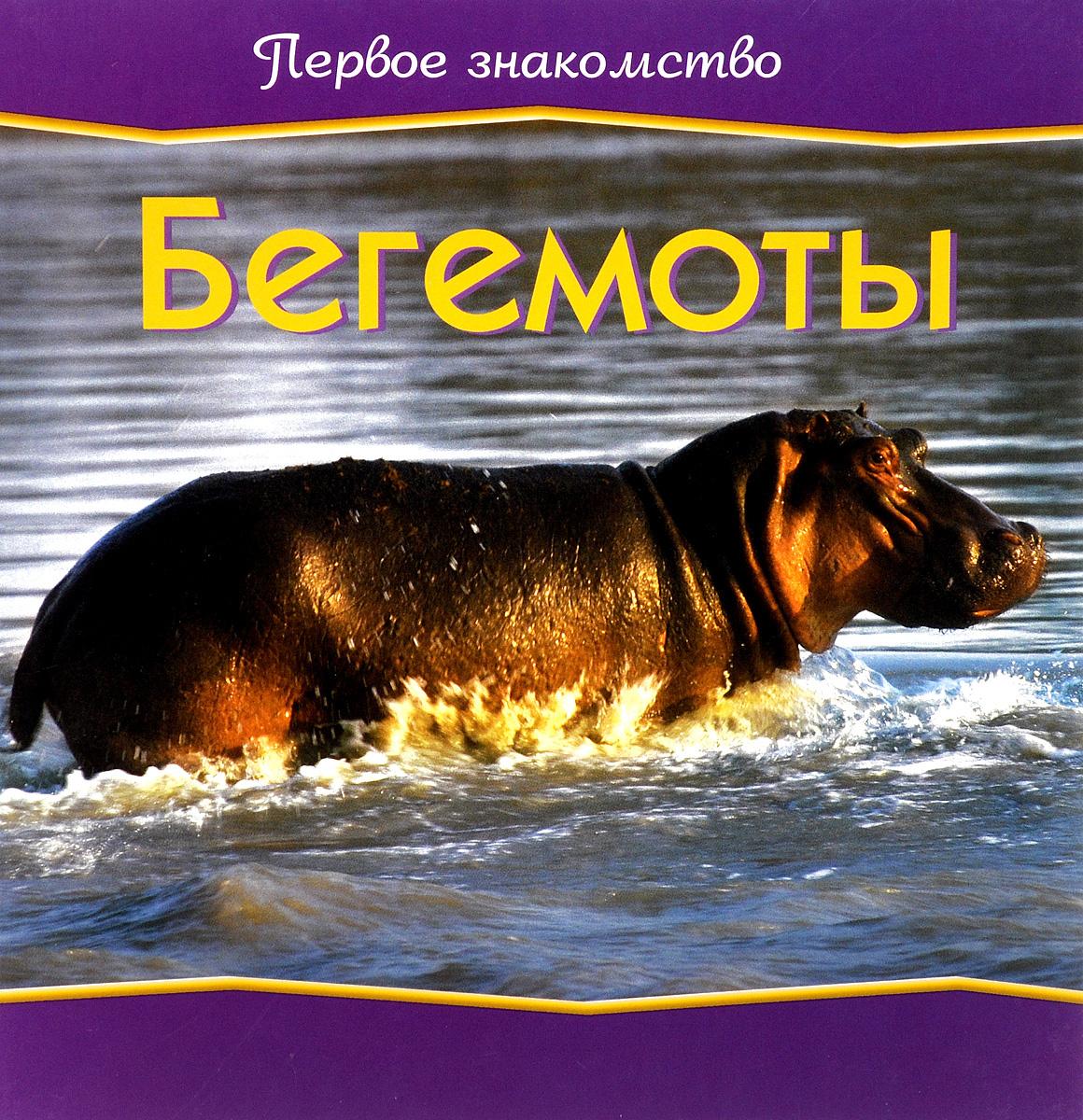 Бегемоты #1