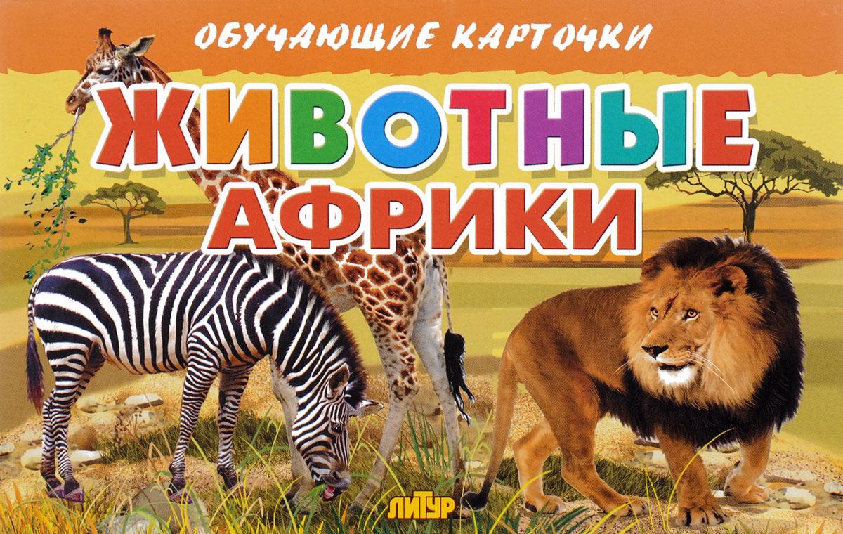 Животные Африки (набор из 16 карточек) #1