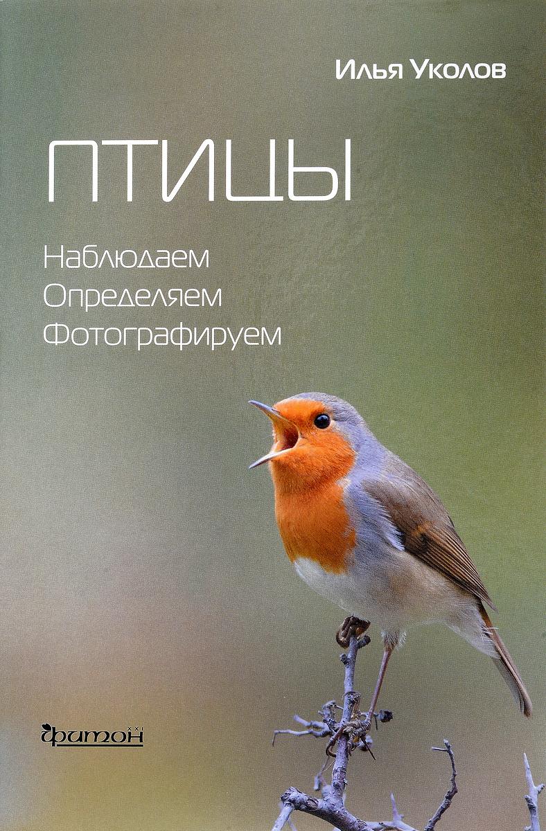 Птицы. Наблюдаем, определяем, фотографируем   Уколов Илья Иванович  #1