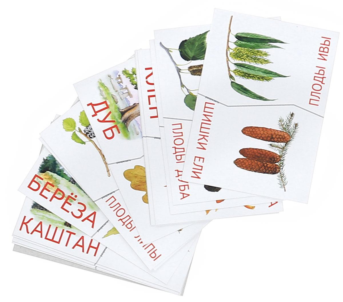 Деревья, плоды, листья. Разрезные карточки | Меньшиков И. Б.  #1