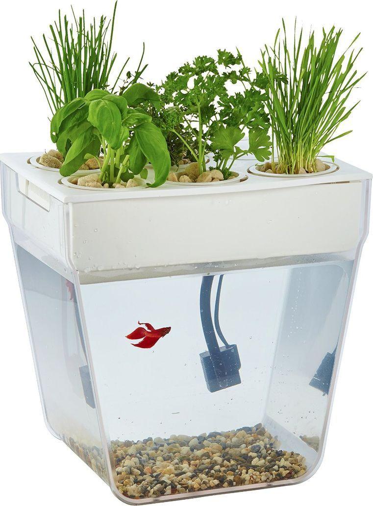 Назад к истокам Набор для выращивания растений и ухода за рыбкой Акваферма  #1