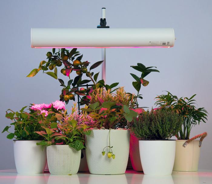 Лампа для растений Aurora Innovations Model 50, H10, 50 Вт #1
