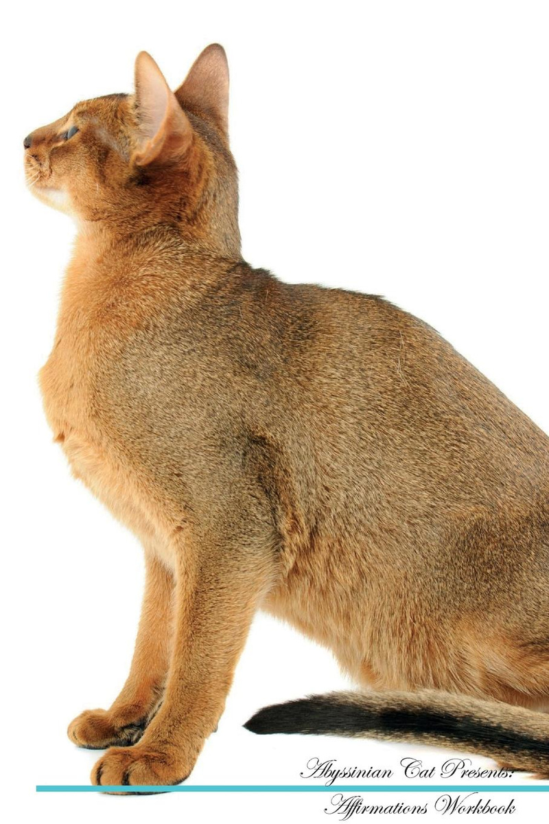 Abyssinian Cat Affirmations Workbook Abyssinian Cat Presents  Positive and  Loving Affirmations Workbook  Includes: Mentoring Questions, Guidance,