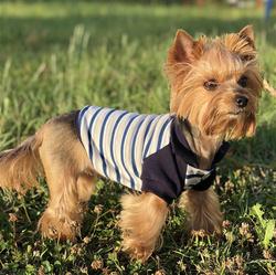 228ad42d122 Одежда для собак купить в интернет магазине OZON.ru