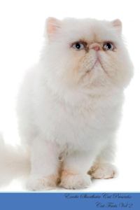 Exotic Shorthair Cat Presents.  ...