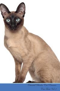 Oriental Bicolor Cat Presents.  ...