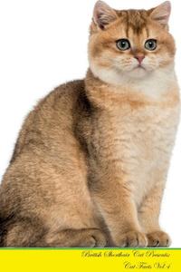 British Shorthair Cat Presents.  ...