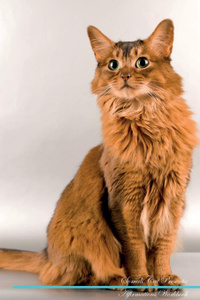 Somali Cat Affirmations Workbook Somali Cat Presents. Positive and Loving Affirmations Workbook. Includes: Mentoring Questions, Guidance, Supporting You.