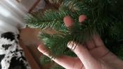 Искусственная Елка National Tree Company, Литая+ПВХ, 183 см #4, Серегина Виктория Викторовна