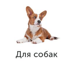 игровые сайты про животных