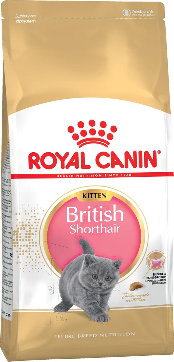 """Корм сухой Royal Canin """"British Shorthair Kitten"""", для британских короткошерстных котят в возрасте от #1"""