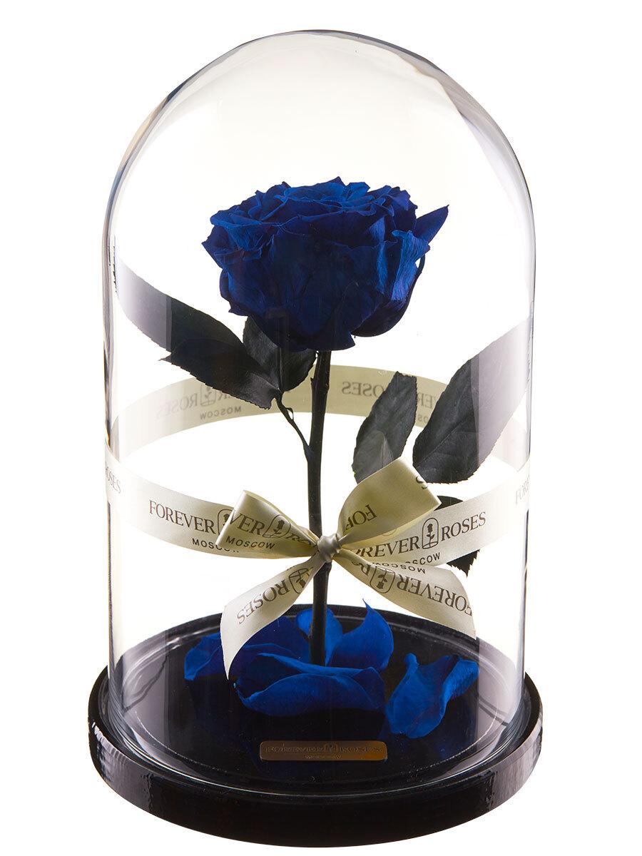 """роза в колбе premium forever roses moscow """"premium"""", цвет: синий, 270 х 160 х 160"""