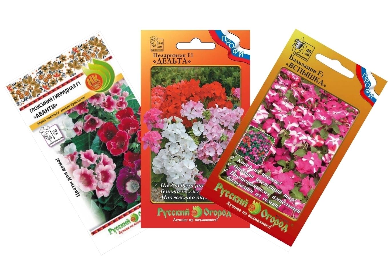 Семена Домашних Цветов Интернет Магазин Каталог Товаров