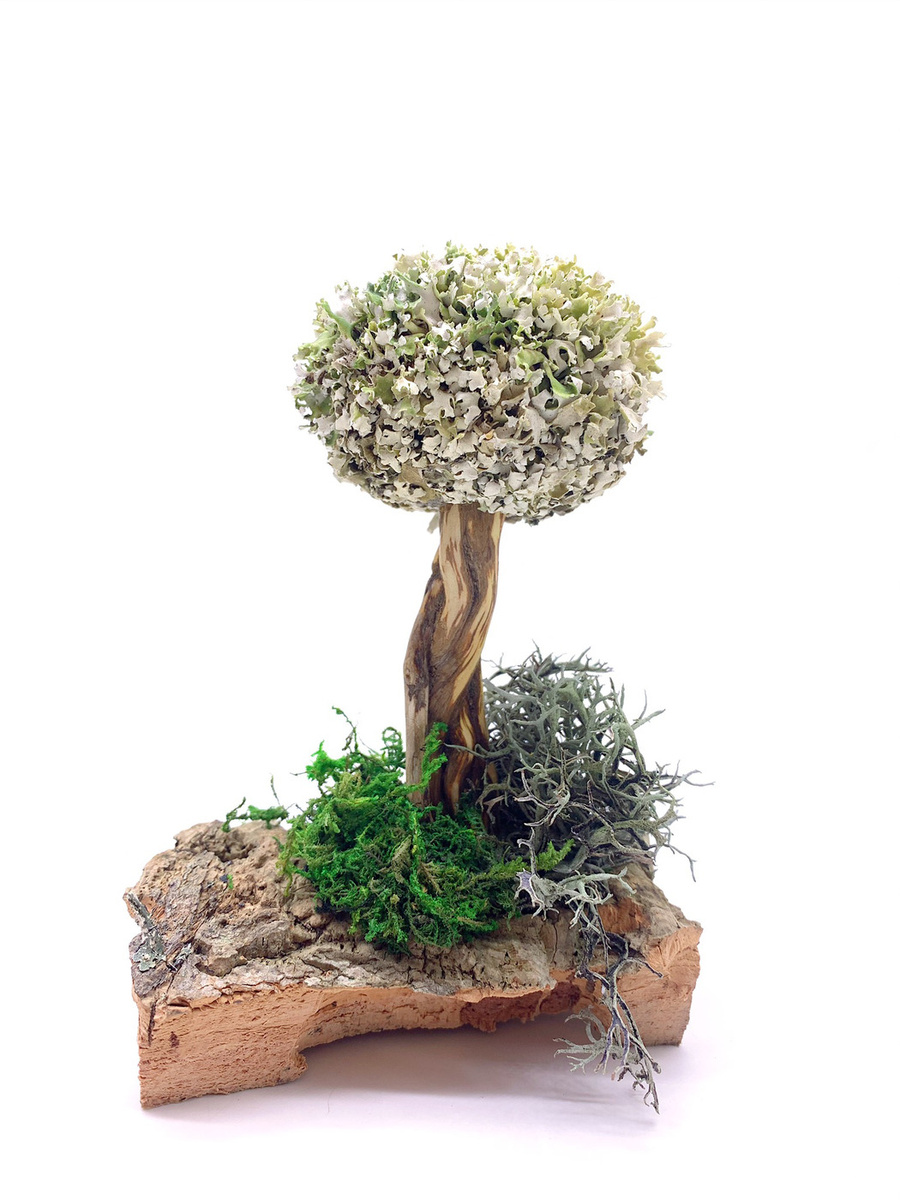 Удивительное дерево из цетрарии #1