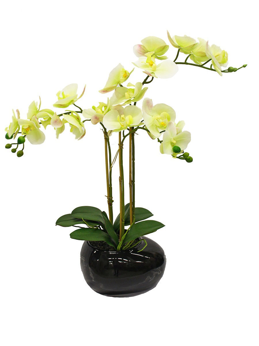 Орхидея в напольном горшке фото
