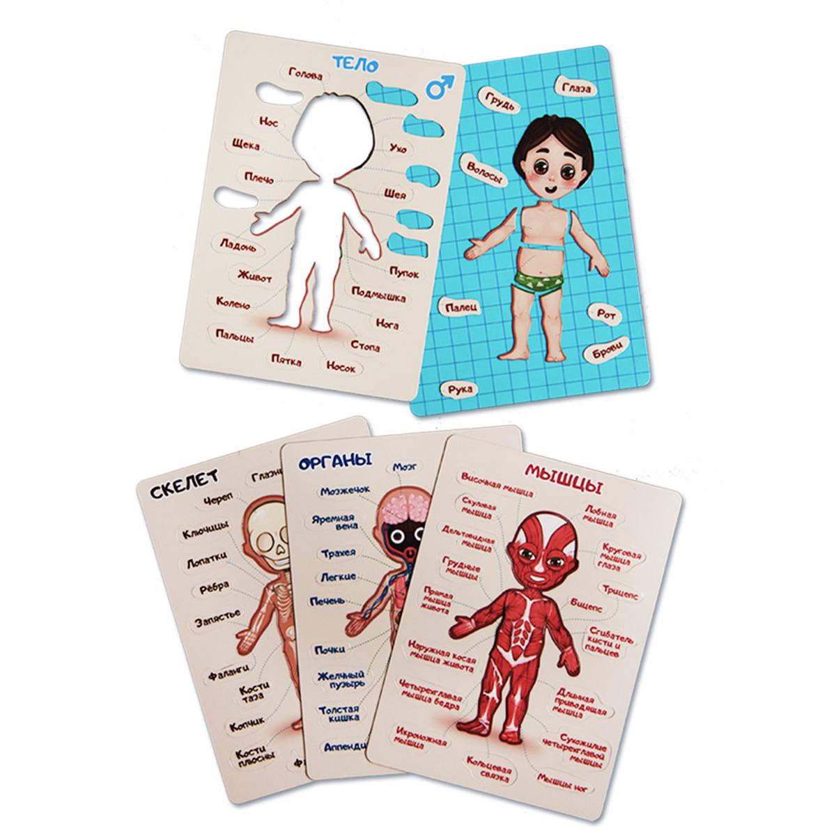 """Магнитная детская настольная развивающая игра-пазл """"Как устроен человек - тело, скелет, анатомия"""" для мальчика - Notta & Belle"""