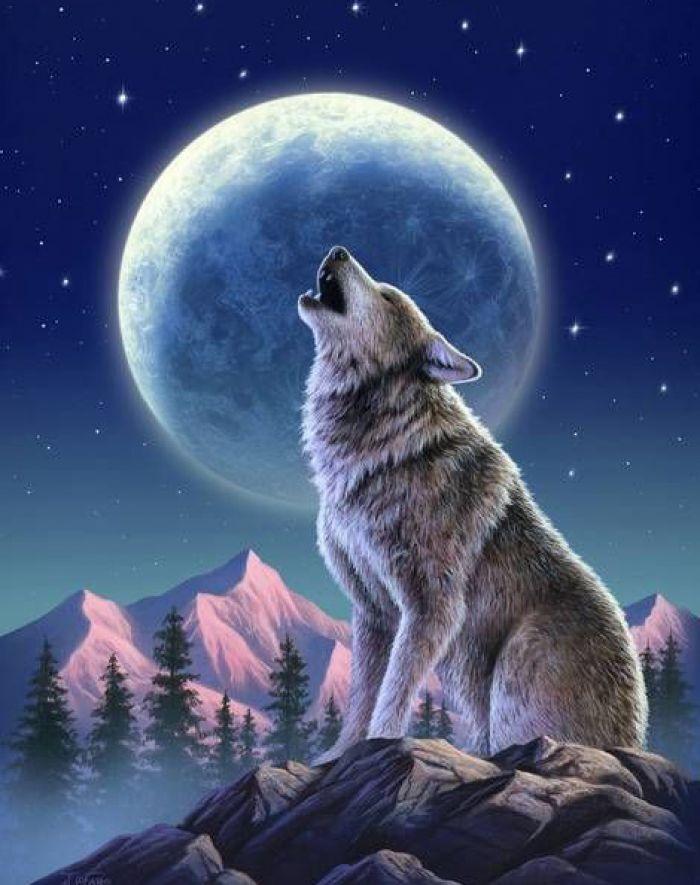 Картинки на телефон волки, марта модульного оригами