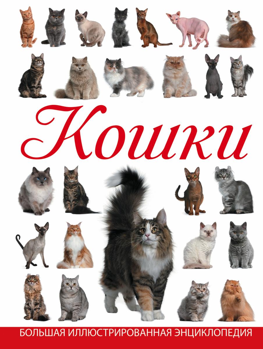 Кошки | Смирнов Дмитрий Сергеевич #1