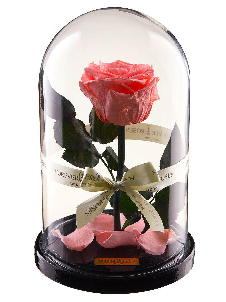 роза в колбе premium forever roses moscow, цвет: светло-розовый, 270 х 160 х 160