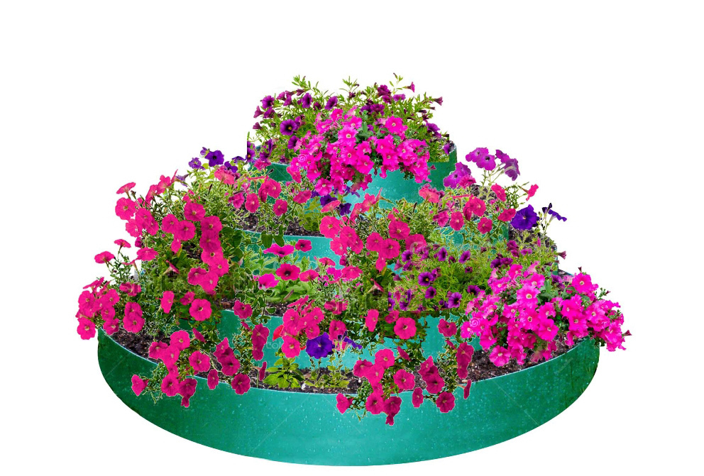 Цветы Для Клумбы Купить Интернет Магазин