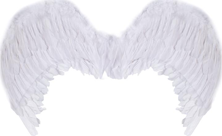 картинка крылья из перьев цветы