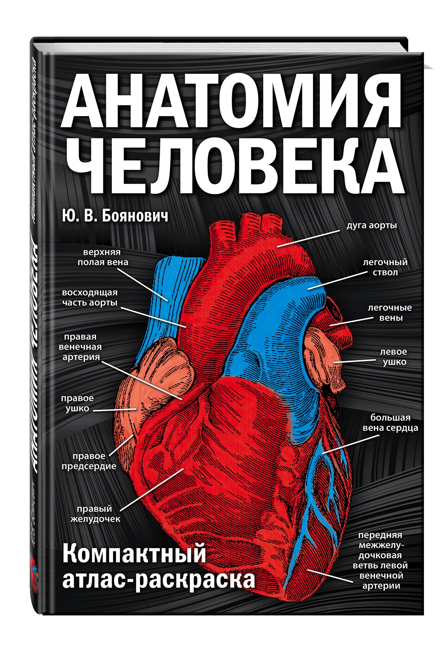 есть, книги по анатомии название этого вида