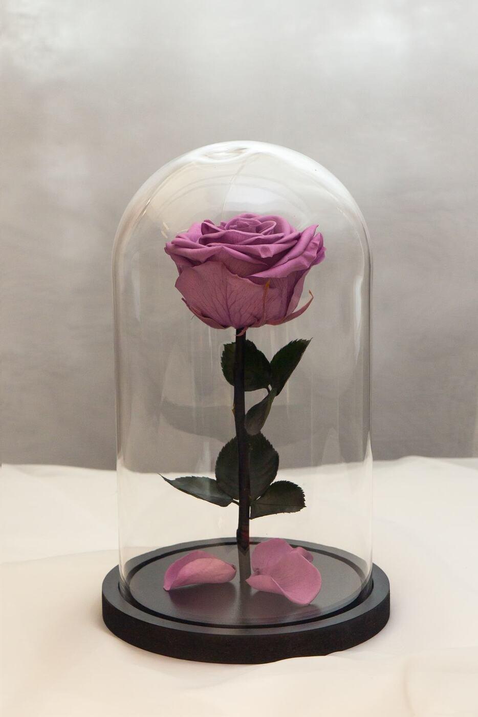 стабилизированные цветы в стекле rozarose роза, 27 см, 1300 гр, 1 шт